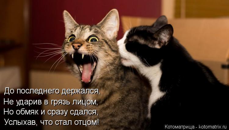 Котоматрица: До последнего держался, Не ударив в грязь лицом, Но обмяк и сразу сдался, Услыхав, что стал отцом!