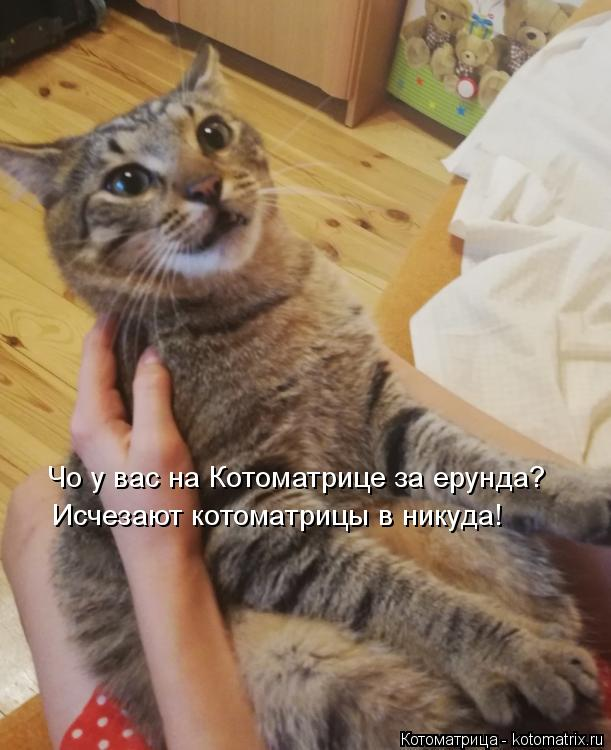 Котоматрица: Чо у вас на Котоматрице за ерунда? Исчезают котоматрицы в никуда!