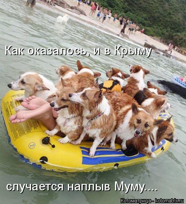 Котоматрица: Как оказалось, и в Крыму случается наплыв Муму....