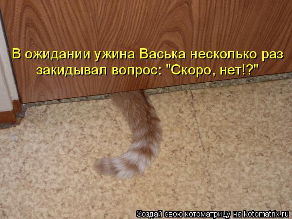 """Котоматрица: В ожидании ужина Васька несколько раз закидывал вопрос: """"Скоро, нет!?"""""""