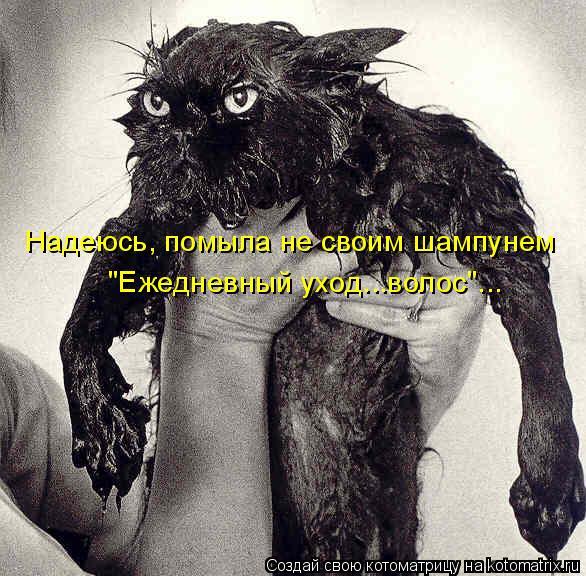 """Котоматрица: Надеюсь, помыла не своим шампунем """"Ежедневный уход...волос""""..."""