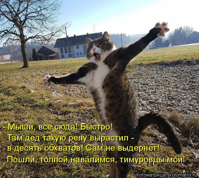 Котоматрица: - Мыши, все сюда! Быстро! Там дед такую репу вырастил -  в десять обхватов! Сам не выдернет! Пошли, толпой навалимся, тимуровцы мои!