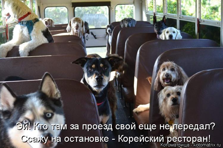 Котоматрица: Эй! Кто там за проезд свой еще не передал? Ссажу на остановке - Корейский ресторан!