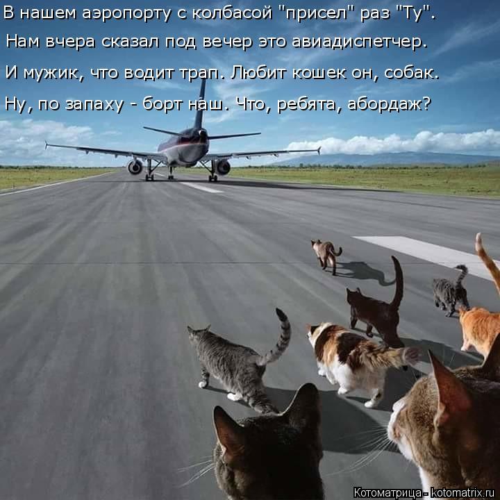 Котоматрица: Нам вчера сказал под вечер это авиадиспетчер. И мужик, что водит трап. Любит кошек он, собак. Ну, по запаху - борт наш. Что, ребята, абордаж? В на