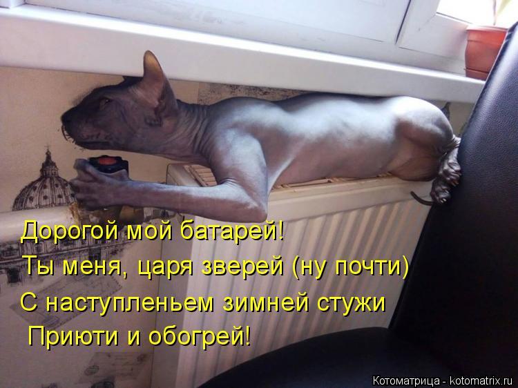 Котоматрица: Дорогой мой батарей! Ты меня, царя зверей (ну почти) С наступленьем зимней стужи Приюти и обогрей!