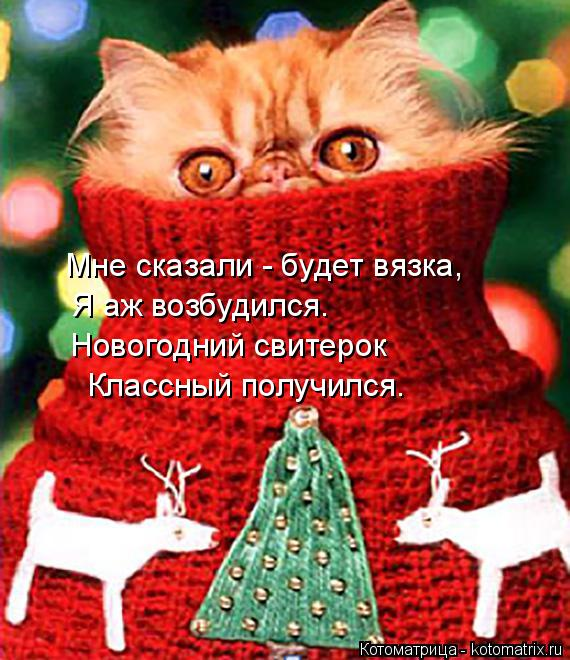 Котоматрица: Мне сказали - будет вязка,  Я аж возбудился.  Новогодний свитерок  Классный получился.