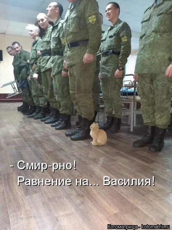 Котоматрица: - Смир-рно! Равнение на... Василия!