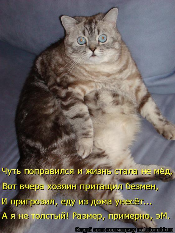 Котоматрица: И пригрозил, еду из дома унесёт... Вот вчера хозяин притащил безмен, Чуть поправился и жизнь стала не мёд, А я не толстый! Размер, примерно, эМ.