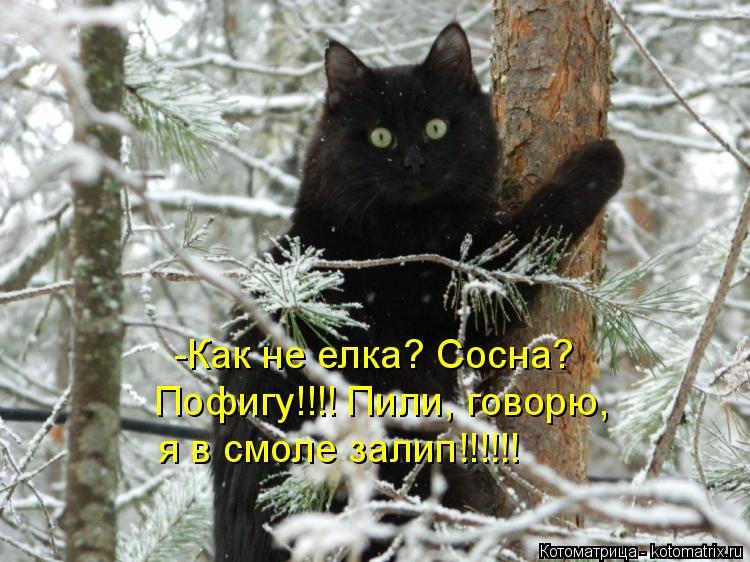Котоматрица: -Как не елка? Сосна? Пофигу!!!! Пили, говорю, я в смоле залип!!!!!!