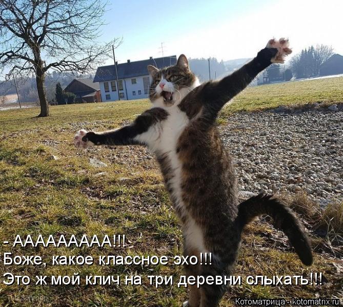 Котоматрица: - ААААААААА!!! Боже, какое классное эхо!!! Это ж мой клич на три деревни слыхать!!!