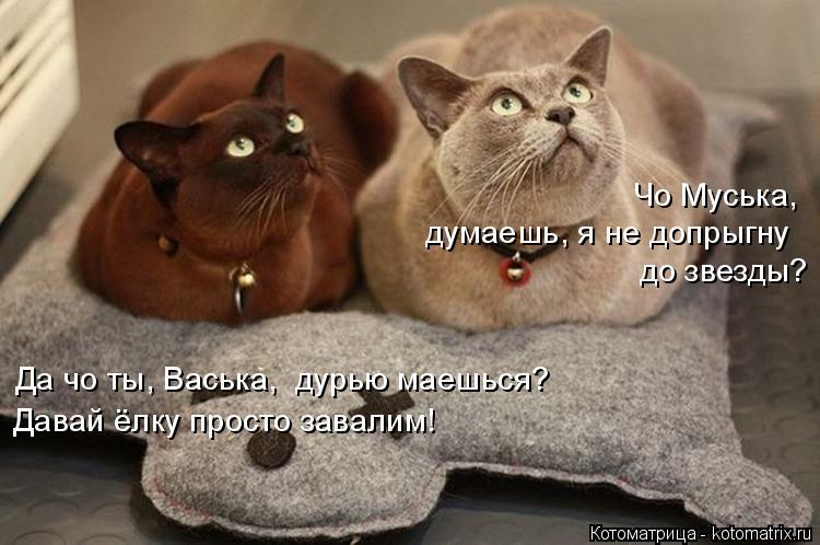 Котоматрица: Чо Муська,  думаешь, я не допрыгну  до звезды? Да чо ты, Васька,  дурью маешься? Давай ёлку просто завалим!