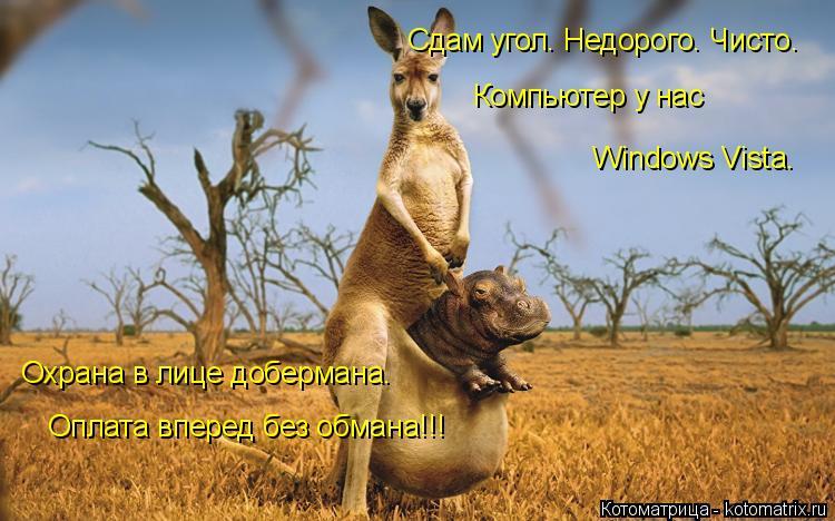 Котоматрица: Охрана в лице добермана. Оплата вперед без обмана!!! Сдам угол. Недорого. Чисто. Компьютер у нас  Windows Vista.
