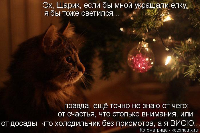 Котоматрица: Эх, Шарик, если бы мной украшали елку, я бы тоже светился... от досады, что холодильник без присмотра, а я ВИСЮ... от счастья, что столько вниман?