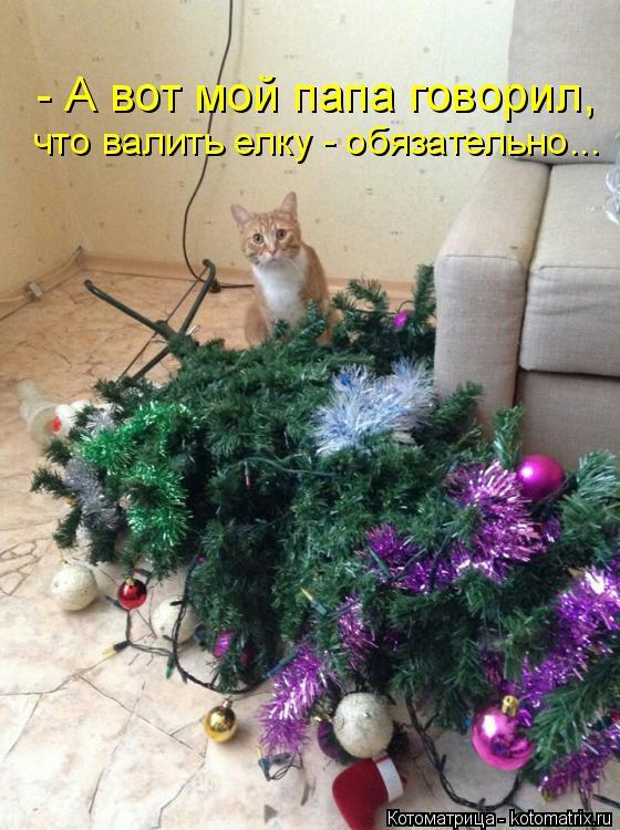 Котоматрица: - А вот мой папа говорил,  что валить елку - обязательно...