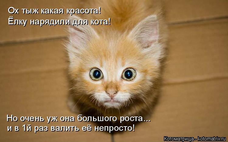 Котоматрица: Ох тыж какая красота! Ёлку нарядили для кота! Но очень уж она большого роста... и в 1й раз валить её непросто!