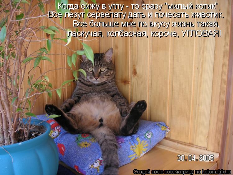 """Котоматрица: Когда сижу в углу - то сразу """"милый котик"""", Все лезут сервелату дать и почесать животик. Все больше мне по вкусу жизнь такая, ласкучая, колбасн"""