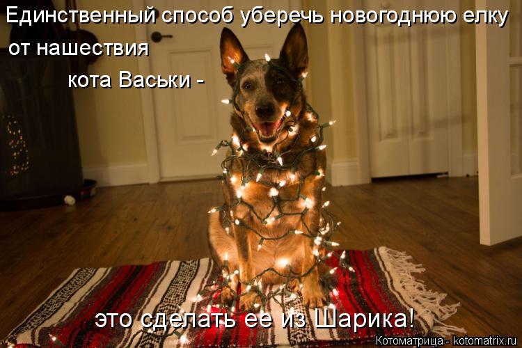 Котоматрица: Единственный способ уберечь новогоднюю елку от нашествия кота Васьки - это сделать ее из Шарика!