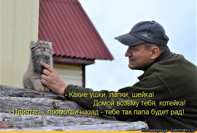 Котоматрица: - Какие ушки, лапки, шейка! Домой возьму тебя, котейка! - Приятель, посмотри назад - тебе так папа будет рад!