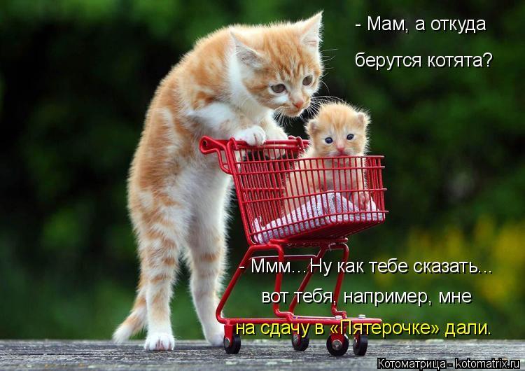Котоматрица: - Мам, а откуда берутся котята? - Ммм…Ну как тебе сказать... вот тебя, например, мне  на сдачу в «Пятерочке» дали.