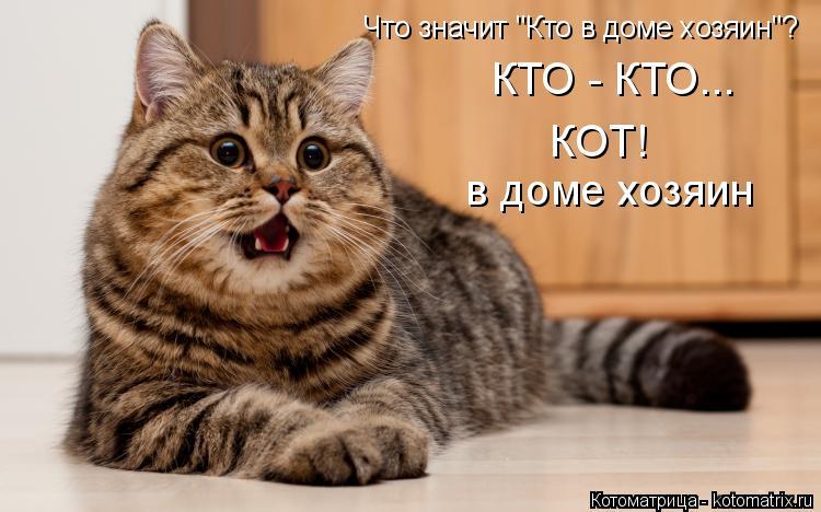 """Котоматрица: Что значит """"Кто в доме хозяин""""? КТО - КТО... КОТ! в доме хозяин"""