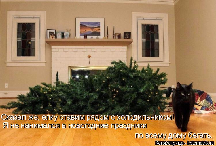Котоматрица: Я не нанимался в новогодние праздники  по всему дому бегать. Сказал же, елку ставим рядом с холодильником!
