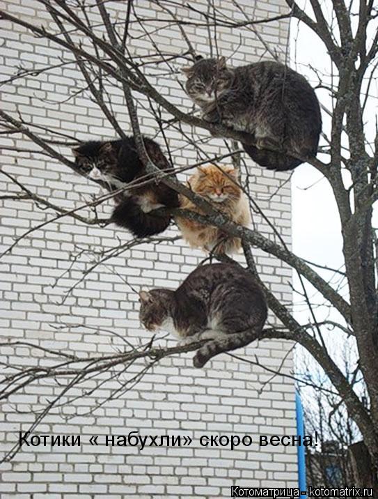 Котоматрица: Котики « набухли» скоро весна!