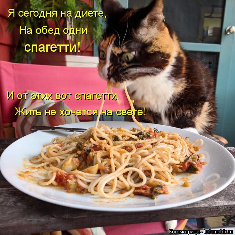 Котоматрица: Я сегодня на диете, На обед одни спагетти! И от этих вот спагетти Жить не хочется на свете!