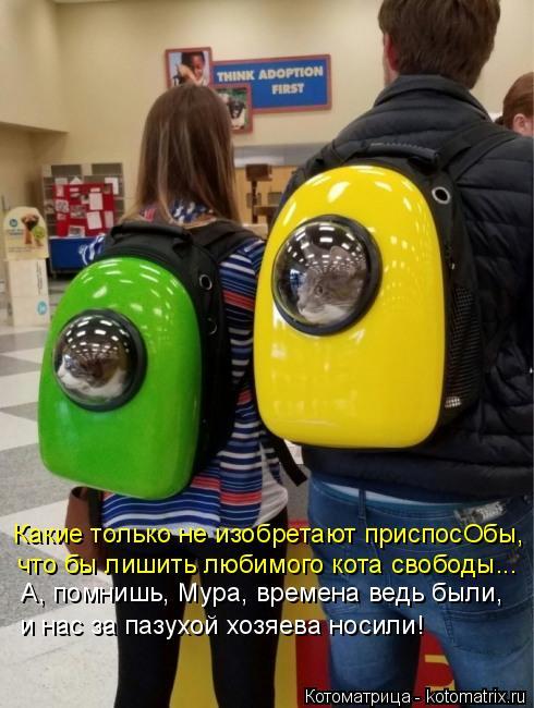 Котоматрица: А, помнишь, Мура, времена ведь были, и нас за пазухой хозяева носили! Какие только не изобретают приспосОбы, что бы лишить любимого кота своб?