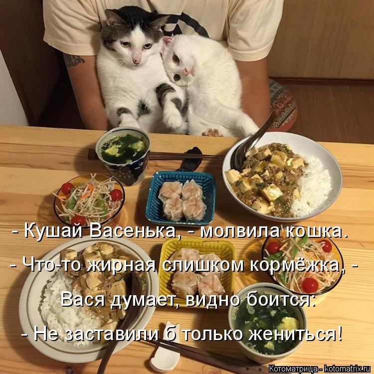Котоматрица: - Кушай Васенька, - молвила кошка. - Что-то жирная слишком кормёжка, - Вася думает, видно боится: - Не заставили б только жениться!