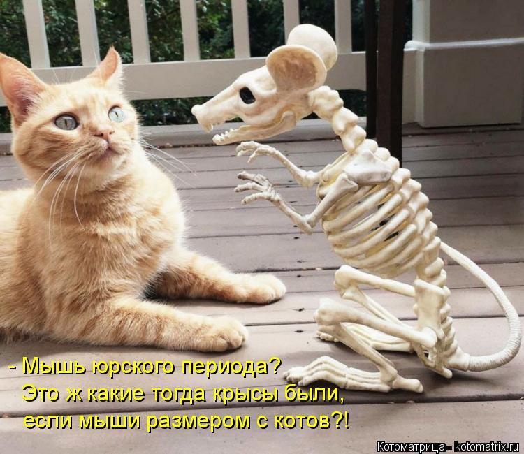 Котоматрица: - Мышь юрского периода? Это ж какие тогда крысы были, если мыши размером с котов?!