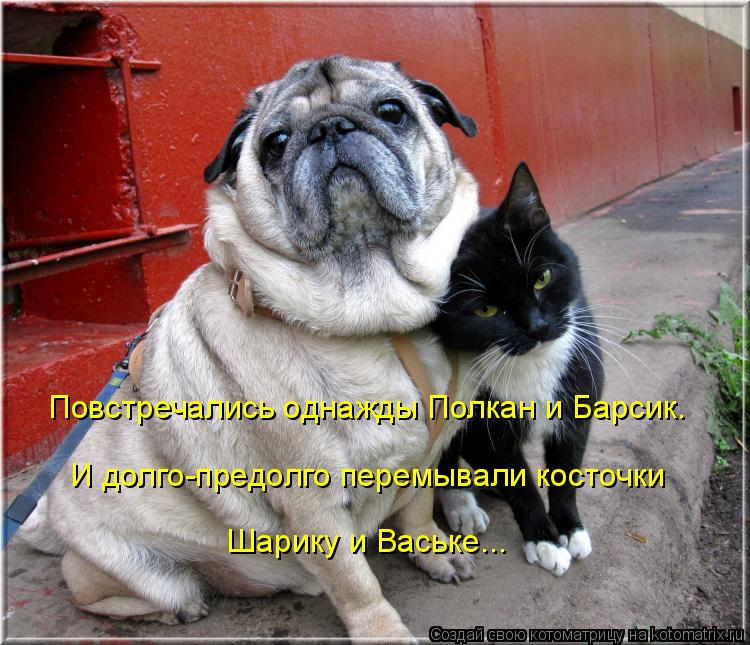 Котоматрица: Повстречались однажды Полкан и Барсик. И долго-предолго перемывали косточки Шарику и Ваське...