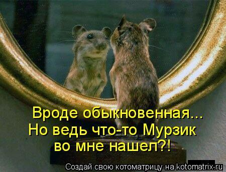 Котоматрица: Вроде обыкновенная... Но ведь что-то Мурзик во мне нашел?!
