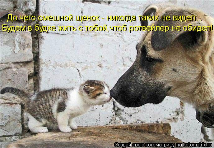 Котоматрица: До чего смешной щенок - никогда таких не видел... Будем в будке жить с тобой,чтоб ротвейлер не обидел!