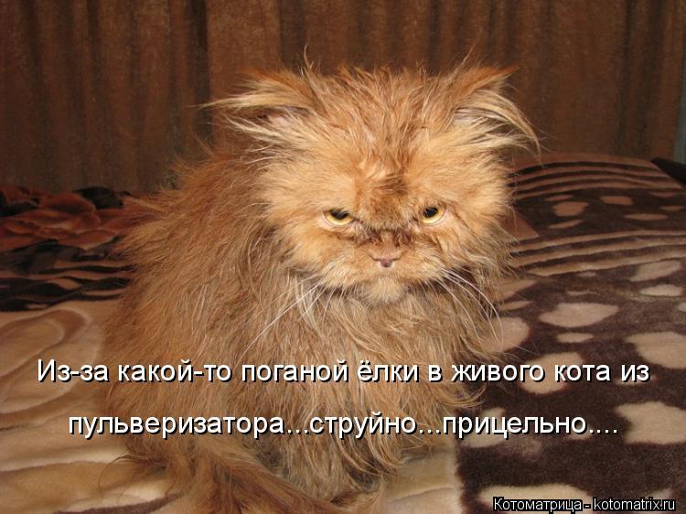 Котоматрица: Из-за какой-то поганой ёлки в живого кота из пульверизатора...струйно...прицельно....
