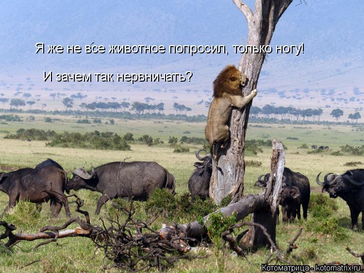 Котоматрица: Я же не все животное попросил, только ногу!  И зачем так нервничать?