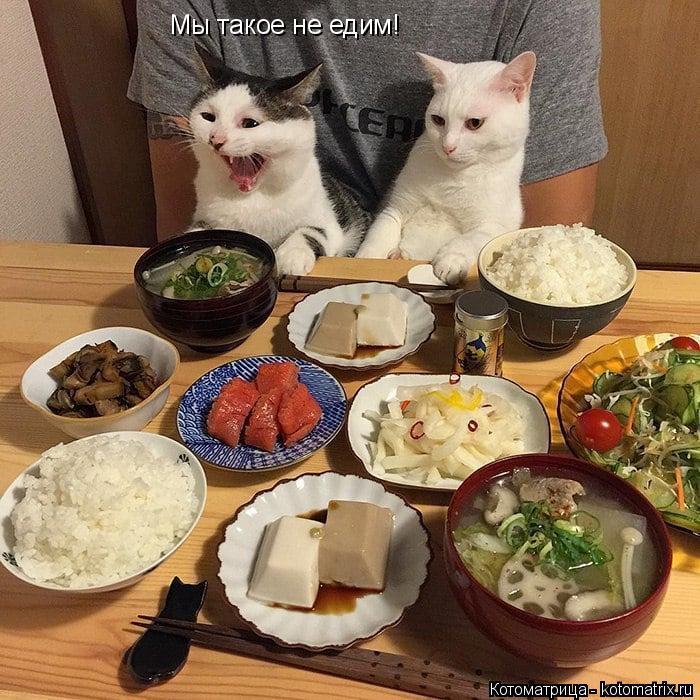 Котоматрица: Мы такое не едим!