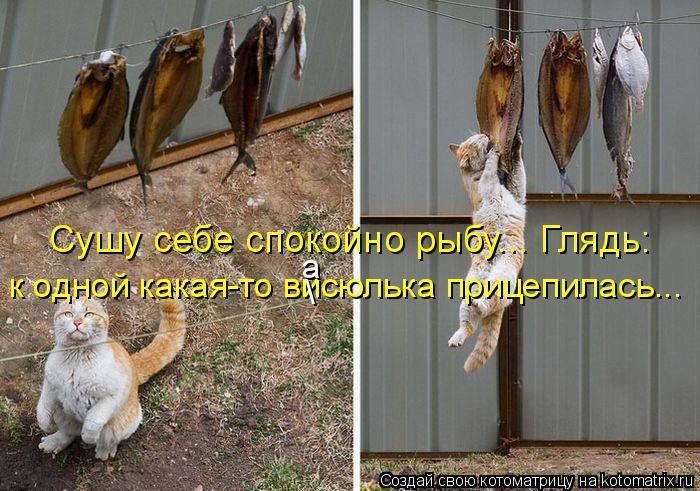 Котоматрица: Сушу себе спокойно рыбу... Глядь: к одной какая-то висюлька прицепилась... \ а