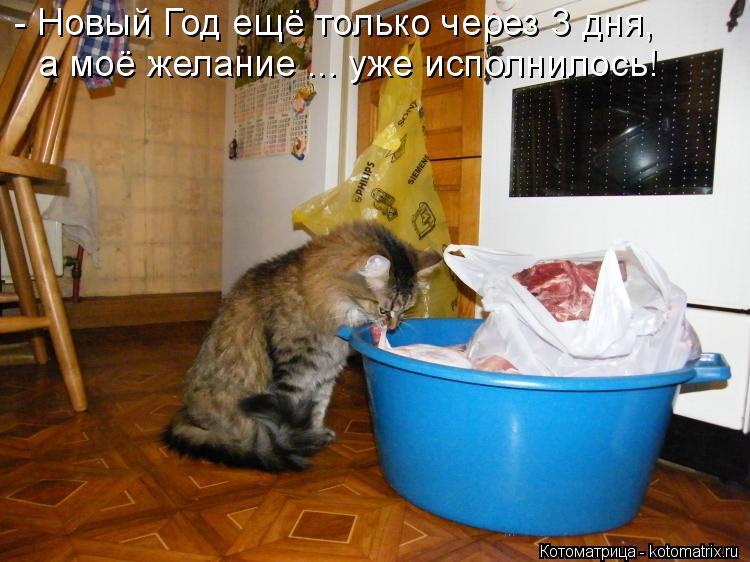 Котоматрица: - Новый Год ещё только через 3 дня, а моё желание ... уже исполнилось!