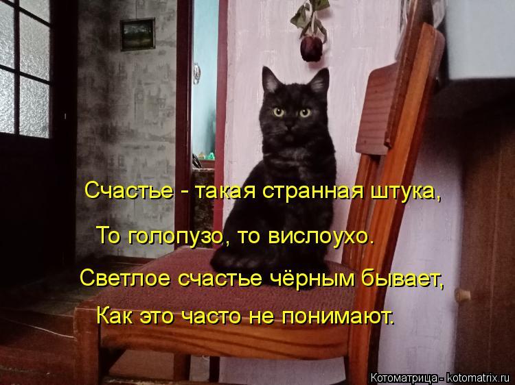 Котоматрица: Счастье - такая странная штука, То голопузо, то вислоухо. Светлое счастье чёрным бывает, Как это часто не понимают.