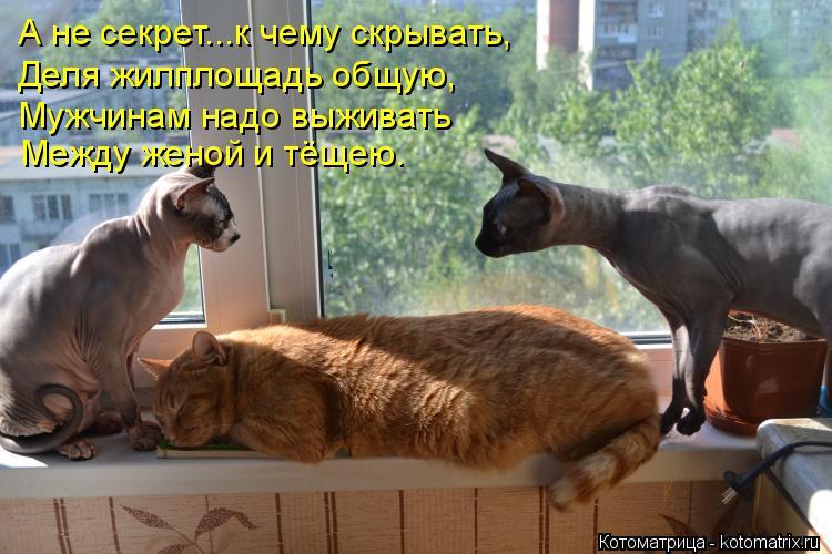Котоматрица: А не секрет...к чему скрывать, Деля жилплощадь общую, Мужчинам надо выживать Между женой и тёщею.