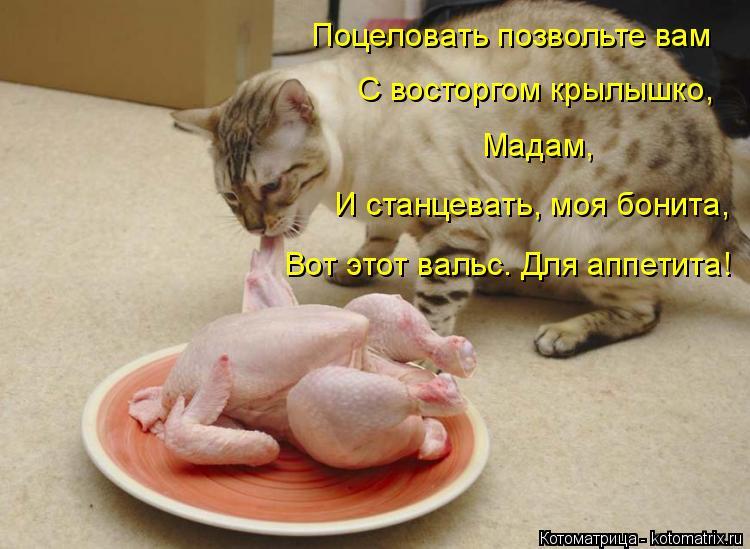 Котоматрица: Поцеловать позвольте вам С восторгом крылышко, Мадам, И станцевать, моя бонита, Вот этот вальс. Для аппетита!