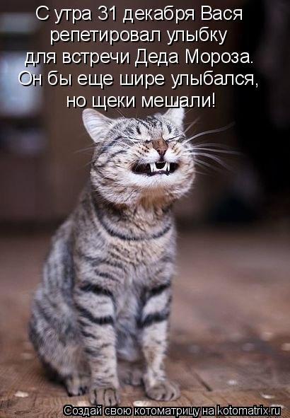 Котоматрица: С утра 31 декабря Вася репетировал улыбку для встречи Деда Мороза. Он бы еще шире улыбался,  но щеки мешали!