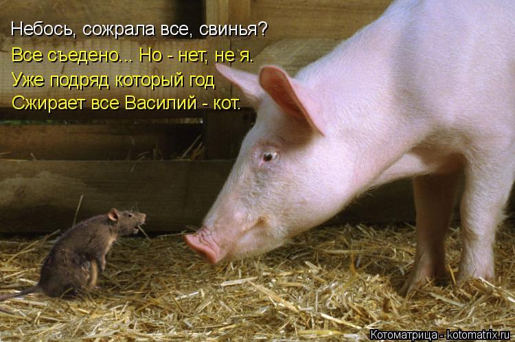 Котоматрица: Небось, сожрала все, свинья? Все съедено... Но - нет, не я. Уже подряд который год Сжирает все Василий - кот.
