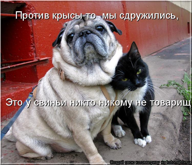 Котоматрица: Против крысы-то  мы сдружились, Это у свиньи никто никому не товарищ...