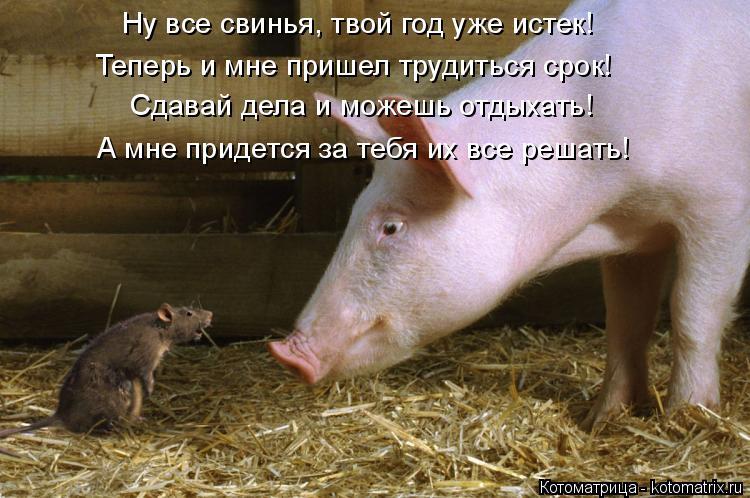 Котоматрица: Ну все свинья, твой год уже истек! Сдавай дела и можешь отдыхать! А мне придется за тебя их все решать!  Теперь и мне пришел трудиться срок!