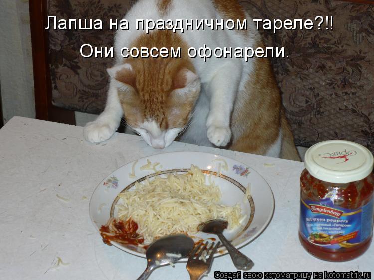 Котоматрица: Лапша на праздничном тареле?!! Они совсем офонарели.