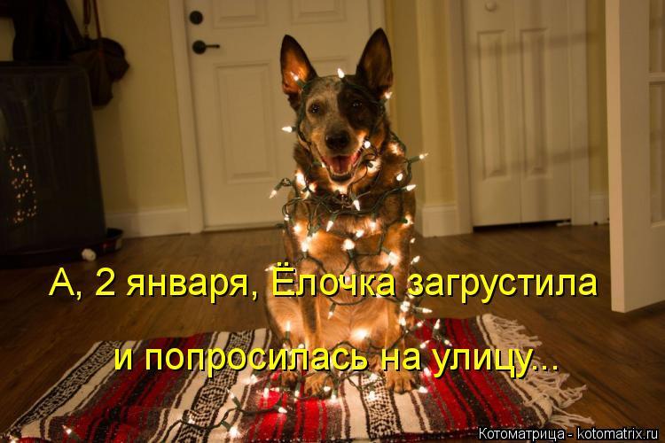 Котоматрица: А, 2 января, Ёлочка загрустила и попросилась на улицу...