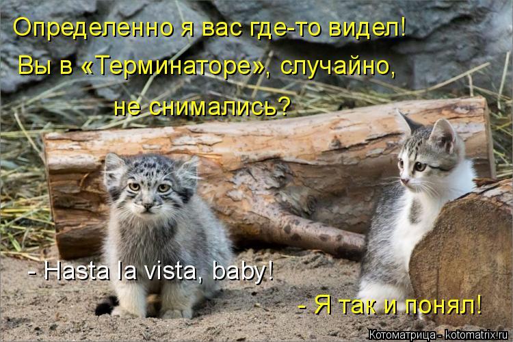 Котоматрица: Определенно я вас где-то видел! Вы в «Терминаторе», случайно, не снимались? - Hasta la vista, baby! - Я так и понял!