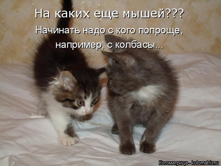 Котоматрица: Начинать надо с кого попроще,  например, с колбасы... На каких еще мышей???