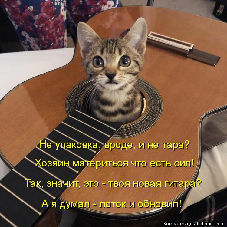 Котоматрица: Не упаковка, вроде, и не тара? Хозяин материться что есть сил! Так, значит, это - твоя новая гитара? А я думал - лоток и обновил!